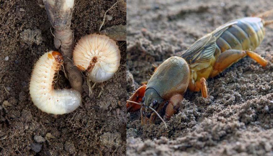 Эффективное средство против почвенных вредителей
